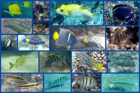 1-Best fish
