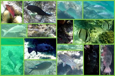 1-Best fish2