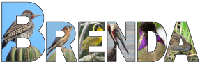 Signature Birds 15 outline